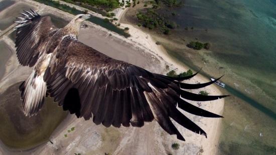 Bali, eagle, Capungaero